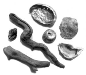 貝殻&流木
